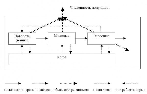 Блок-схема модели динамики